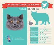 British Shorthair Cat breed infographics royalty free illustration