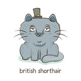 British shorthair. Cat character  on white Stock Images