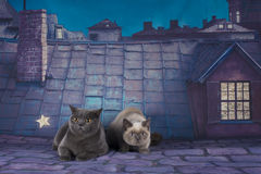 British Shorthair cat couple on a night roof Royalty Free Stock Photo