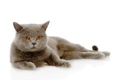British shorthair cat lying. isolated on white background Stock Photography