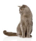 British shorthair cat sitting in front and looking away. isolated Stock Photos