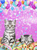 British shorthair cat with streamers Royalty Free Stock Photos