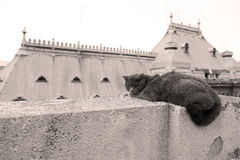 British Shorthair cat up on a roof Stock Images