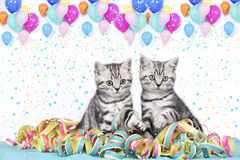 British shorthair cats with streamers. And balloons Royalty Free Stock Photos