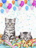 British shorthair cats with streamers Stock Photos