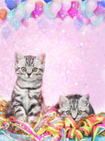 British shorthair cats with streamers Stock Photo