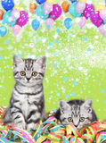 British shorthair cats with streamers Royalty Free Stock Images