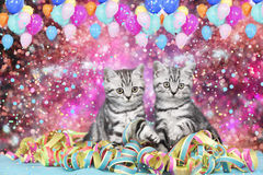 British shorthair cats with streamers Stock Photography