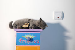 British Shorthair kitten. British Shorthair baby sleeping on a coloured drawer, with a guitar propped on it stock image