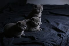 Kittens in the dark, isolated portrait Royalty Free Stock Image