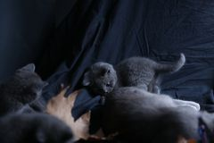 Small kittens in the dark, isolated portrait Royalty Free Stock Image