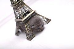 British Shorthair kitten and Eiffel Tour Stock Photo