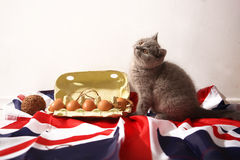 British Shorthair kitten. And few eggs in a carton, Union Jack background Royalty Free Stock Images