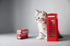 British shorthair kitten, London souvenirs Royalty Free Stock Photography