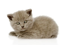 British shorthair kitten looking at camera. isolated Stock Photos
