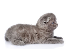 British shorthair kitten lying in profile.  on white Stock Photography