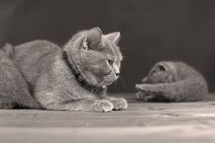 Small kitten with mother on a wooden background, isolated