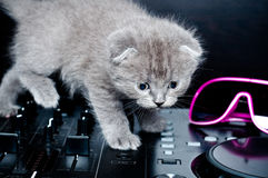 British Shorthair kitten on the remote DJ royalty free stock photo