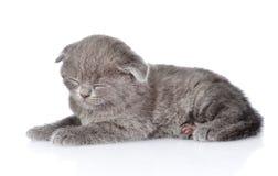 British shorthair kitten sleeping. isolated on white background Royalty Free Stock Image