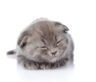 British shorthair kitten sleeping.  on white background Royalty Free Stock Image