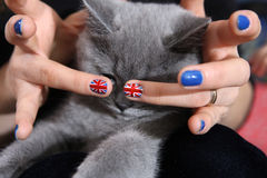 British Shorthair kitten and Union Jack flag. British Shorthair kitten and Union Jack nails Royalty Free Stock Images
