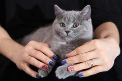 British Shorthair kitten and Union Jack flag. Girl holding a British Shorthair kitten in her hands, Union Jack polished nails, cute close-up portrait Royalty Free Stock Image
