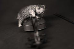 British Shorthair kitten and a violin Royalty Free Stock Images