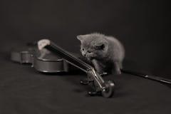 British Shorthair kitten and a violin Royalty Free Stock Photos