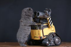 Kitten and a robot Stock Photography
