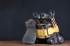 Kitten and a robot Royalty Free Stock Image