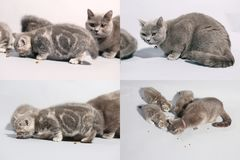 Kittens eating pet food from the floor, multicam, grid 2x2 screen Stock Photography