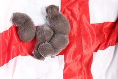 British Shorthair kittens and England flag Royalty Free Stock Photo