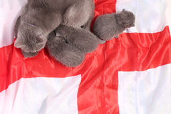 British Shorthair kittens and England flag Royalty Free Stock Image