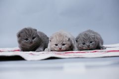 Kittens sitting on small carpet, cute face royalty free stock photography
