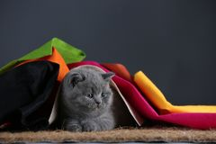 Small kittens covered with a multi color clothes, copy space royalty free stock images