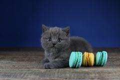 Cute kittens with cakes, wooden background royalty free stock photo