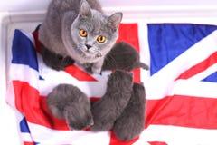 British Shorthair kittens sitting on a UK flag Stock Photography