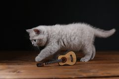 Kitten playing with guitar on wooden background, isolated. British Shorthair lilac kitten playing at the guitar, portrait on a wooden background royalty free stock photo