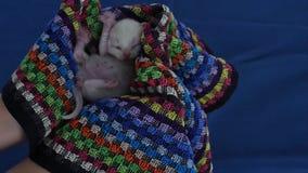 British Shorthair lilac kittens, new born, black background