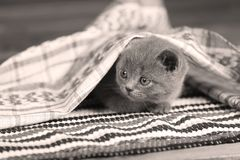 Kittens sitting on a home made rug Stock Image