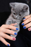 British Shorthair small cat and Union Jack flag Stock Photography