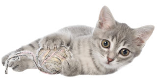 British shorthair tabby kitten lay and plays with ball of yarn Stock Photos