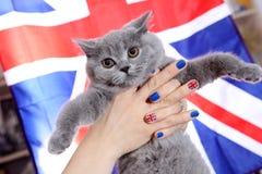 British Shorthairkitten  and Union Jack flag. British Shorthair kitten and Union Jack nails Royalty Free Stock Images