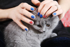 British Shorthairkitten  and Union Jack flag Royalty Free Stock Photography