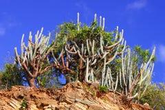 British Virgin Islands Natural Landscape Royalty Free Stock Photo