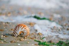Brits de zomerstrand met overzeese van nautiluspompilius shell Stock Fotografie