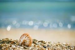 Brits de zomerstrand met overzeese van nautiluspompilius shell Royalty-vrije Stock Afbeeldingen
