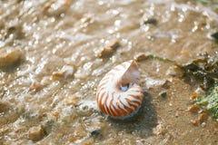 Brits de zomerstrand met overzeese van nautiluspompilius shell Stock Foto's
