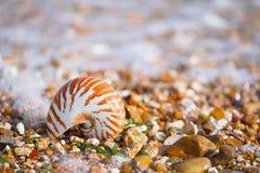 Brits de zomerstrand met overzeese van nautiluspompilius shell Royalty-vrije Stock Foto