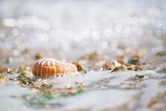 Brits de zomerstrand met overzeese van nautiluspompilius shell Royalty-vrije Stock Fotografie